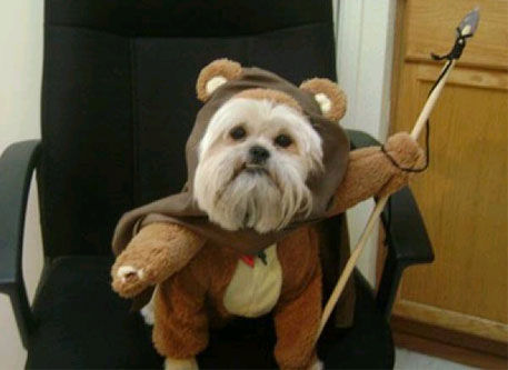 A dog dressed as an ewok