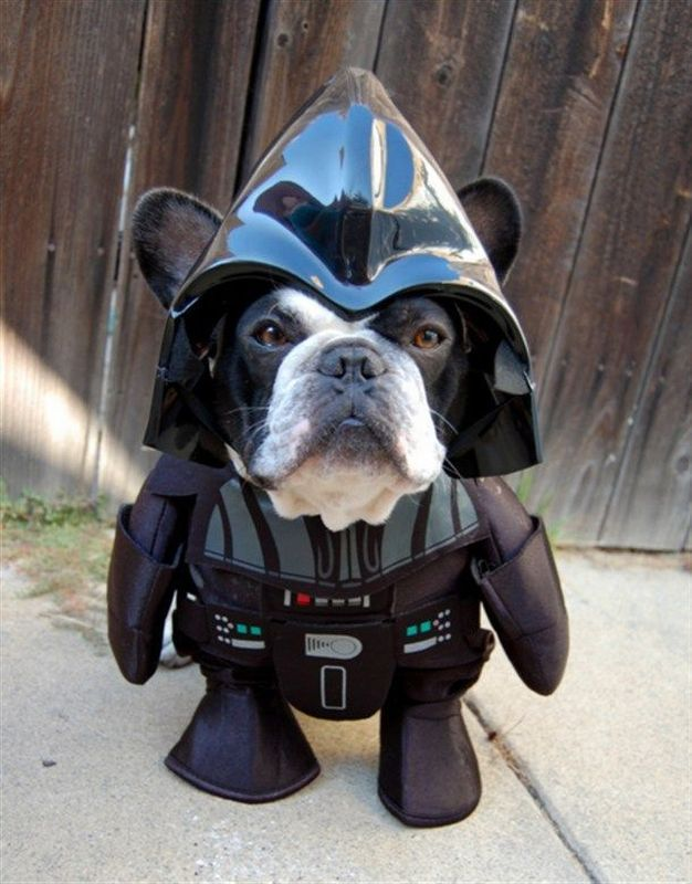 This dog loves cosplay and his favourite costume is to become the Mini Darth Dog. It's empowering apparently.