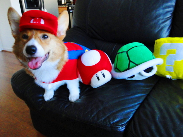 A dog dress as Mario