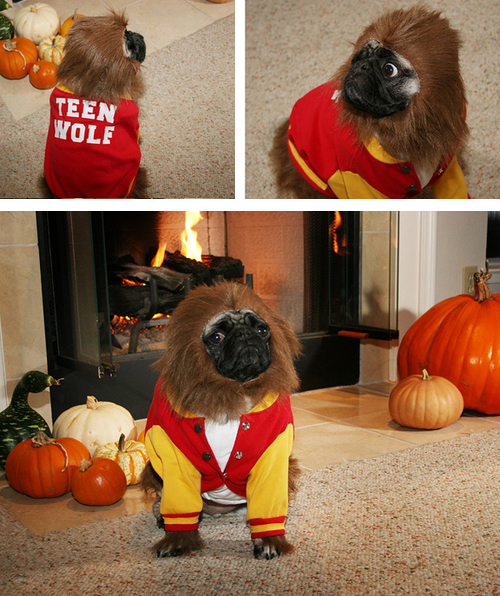 A dog dressed as Teen Wolf