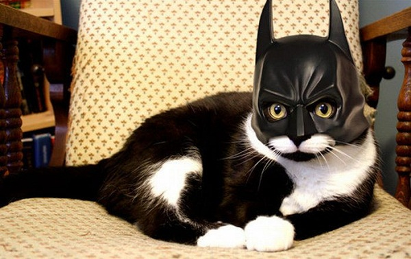 Cat wearing a batman hat, not looking to happy about it either