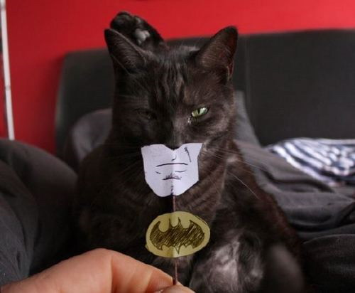 Cat sort of in Dark Knight Cosplay