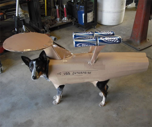 A little bit of paint and this would be a perfect Dog USS Enterprise costume