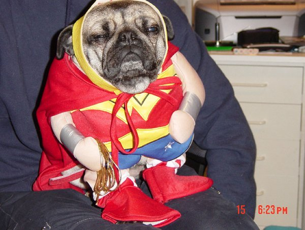 Don't just sit there wonder woman dog, save us!