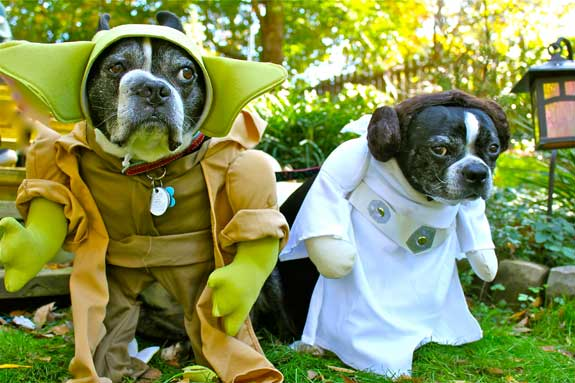 Dogs dressed as Yoda and Princess Leia