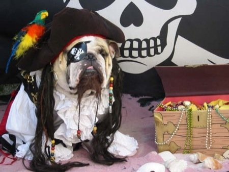 We have heard that this Jack Sparrow pooch's speciality is burying treasure.