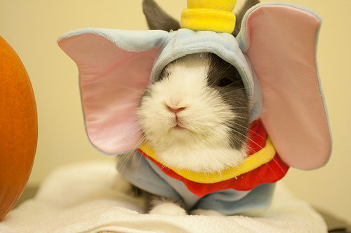 Looks like a rabbit dressed as Dumbo. I think it is!