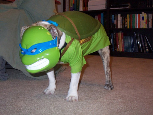 we cannot see the dog's face, but we are sure he is loving his cosplay outfit as much as we are