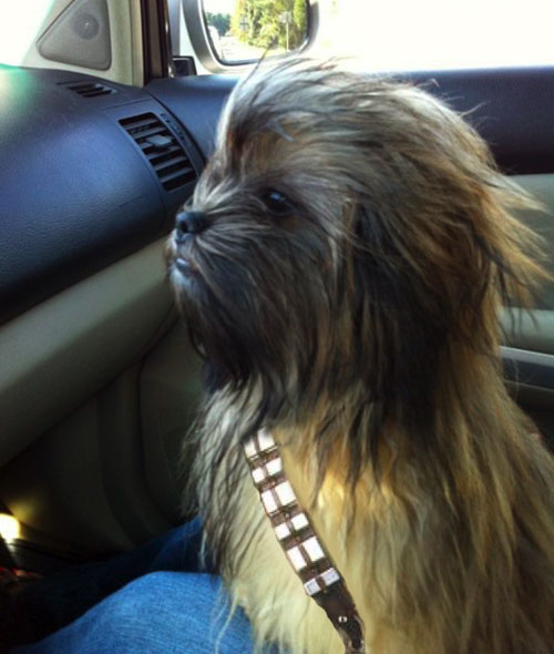 Does anyone know how to spell the noise Chewbacca makes when he talks?