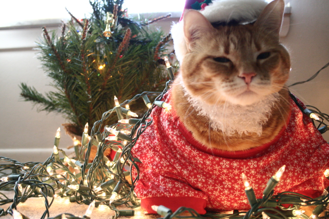 Christmas cat cosplay