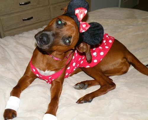 Minnie-Mouse-Mutt-cosplay