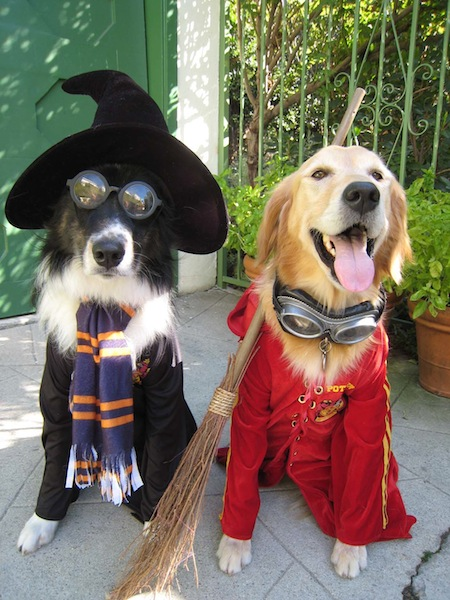 harry-potter-dogs