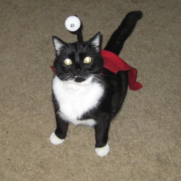 nibbler cat