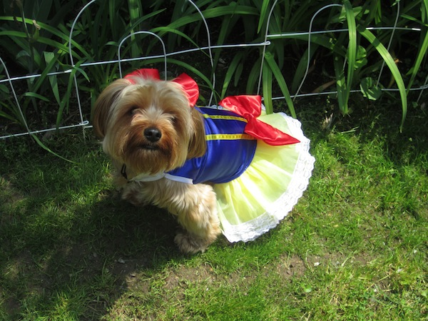 snow-white-pooch