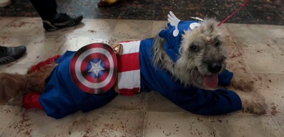 Captian_America_dog