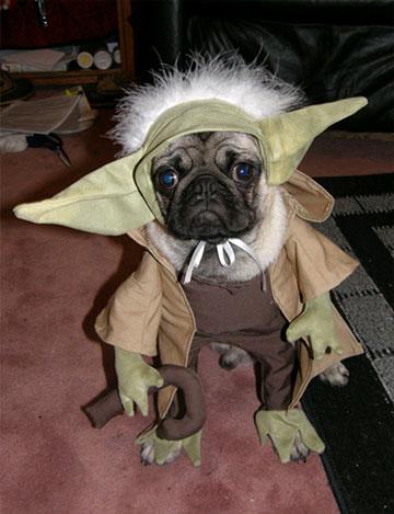 Pug-yoda-dog-cosplay