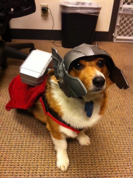 Thor - Dog Cosplay