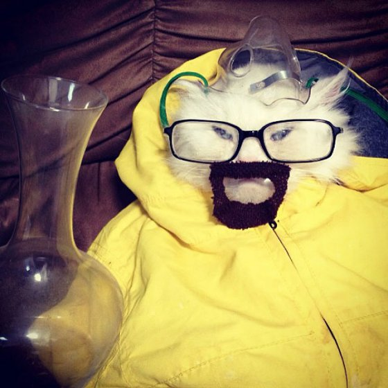 breaking bad cat costume