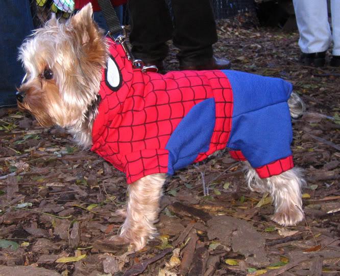 Spider-Man dog cosplay