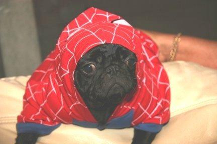 spiderdog-man