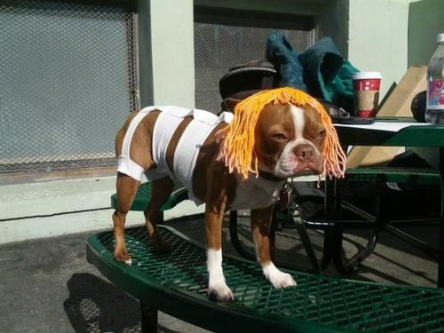 leeloo-dog