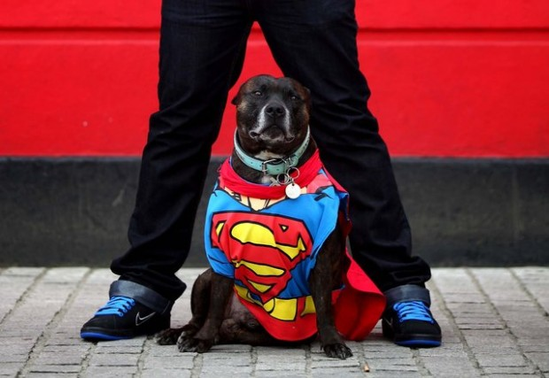 superman-dog