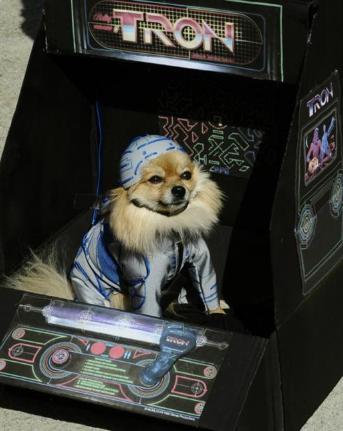 tron-dog