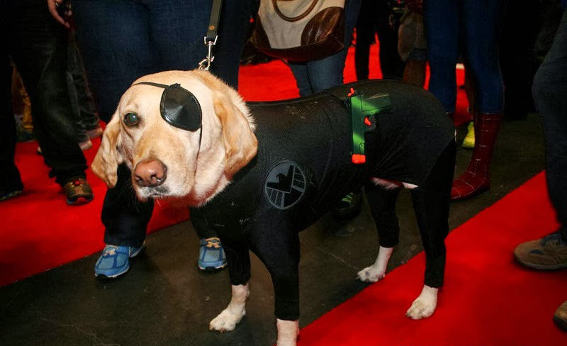 Nick Fury Dog