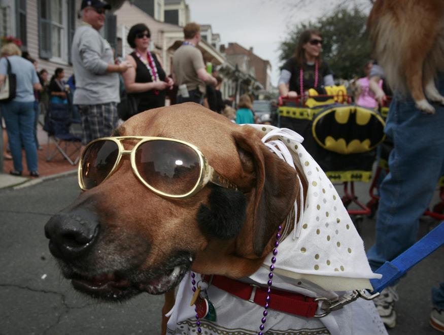 dog-elvis