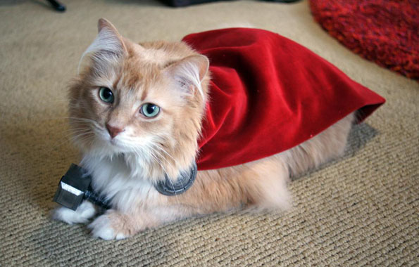cat-dressed-like-thor