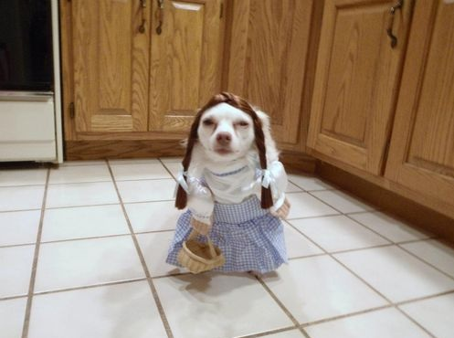 dog-dressed-as-dorothy