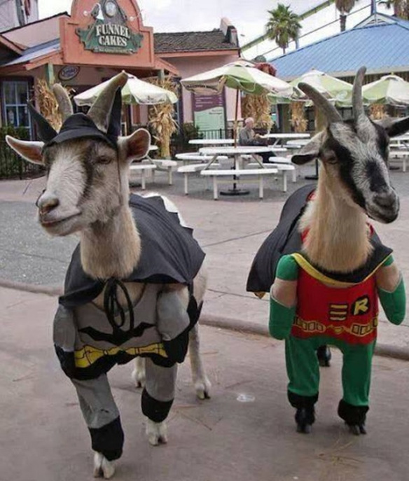 goats-dressed-as-batman-robin