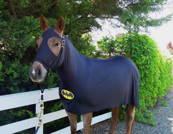 horse-dressed-as-batman