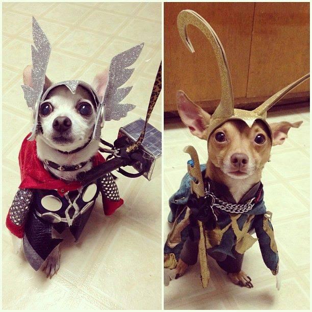 avengers-thor-loki-dogs