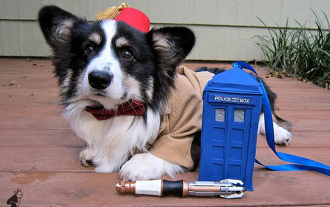 corgi-as-the-doctor