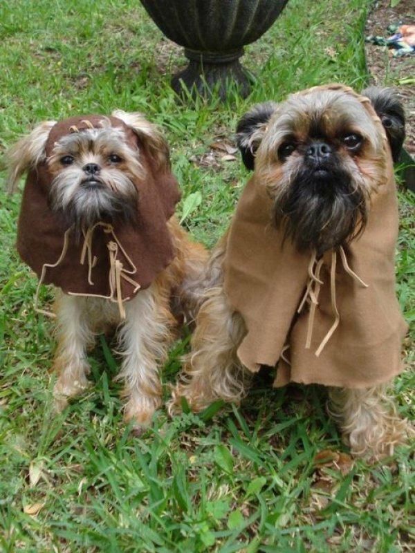 ewok-dogs