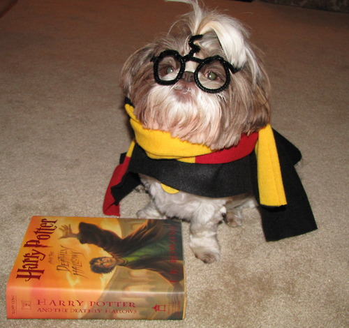 harry-potter-dog