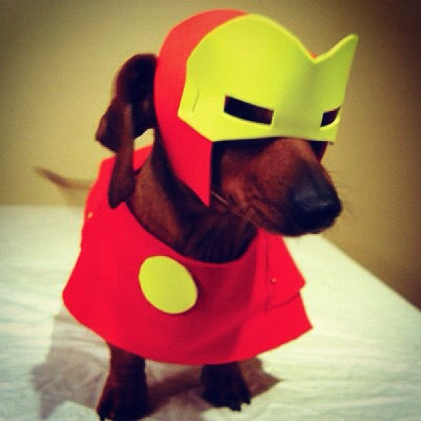 iron-man-dog