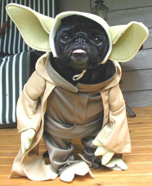 yoda-dog-cosplay