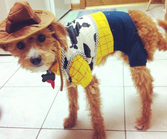Woody-Dog