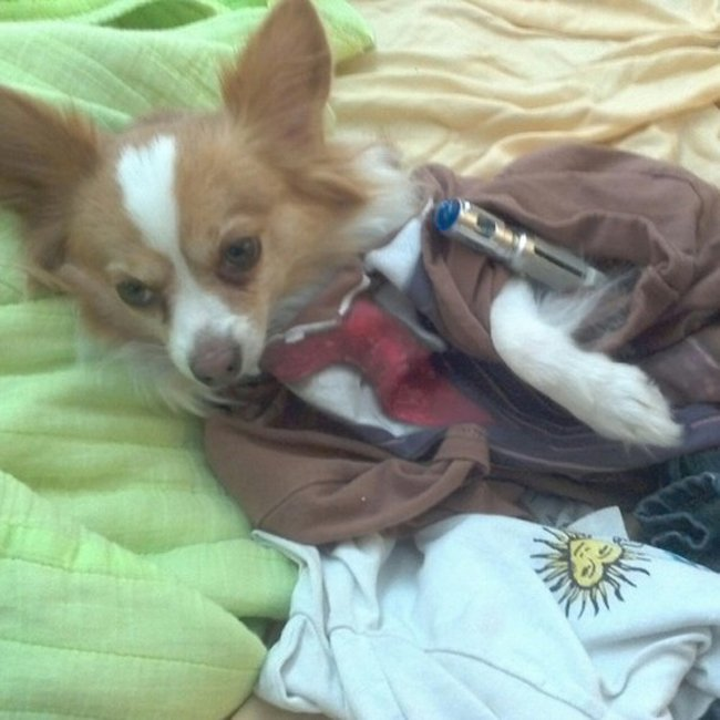 dr-who-dog