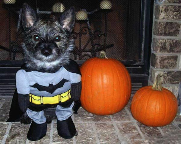 Batman-Dog