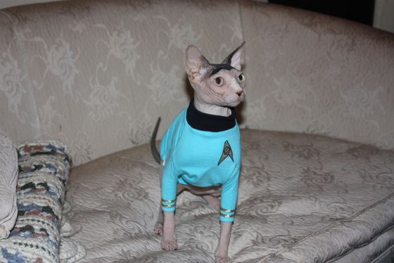 Spock Cat