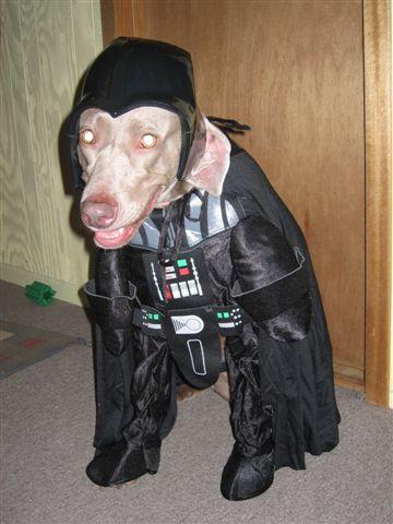 Dog Darth Vader