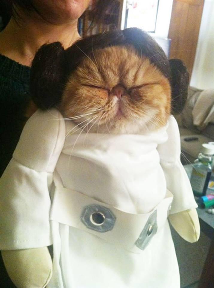 Leia Cat