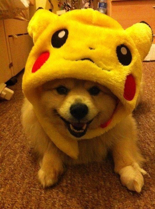 Pikachu doggy