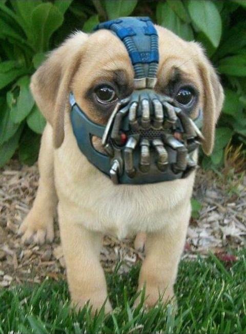 Bane was a puppy