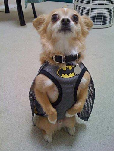 Batdog is a standup guy