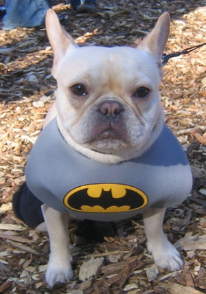 batman-dog-mean