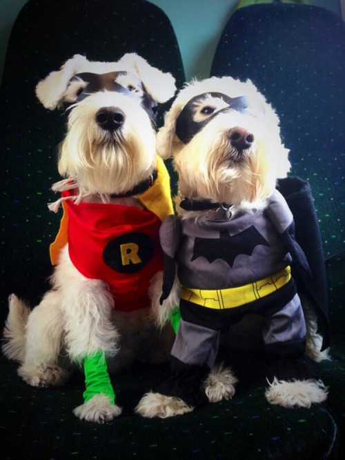 Batman and Robin Dogs